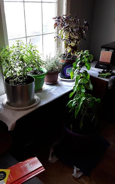 5 plants