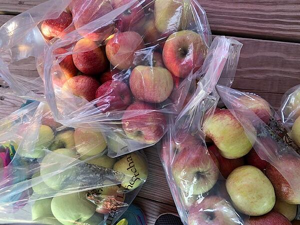 bagged apples