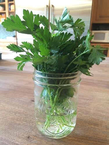 how to store herbs