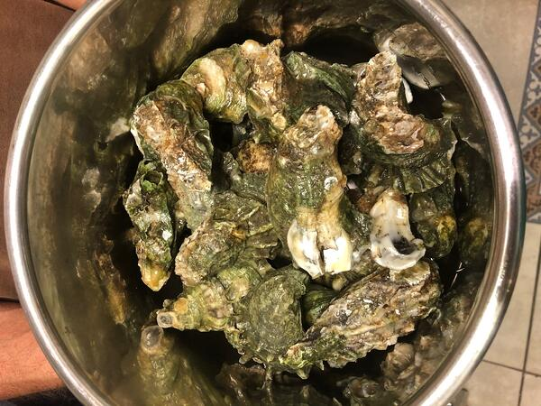 oysters in instant pot