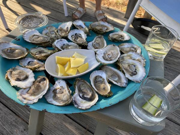 raw oysters-1
