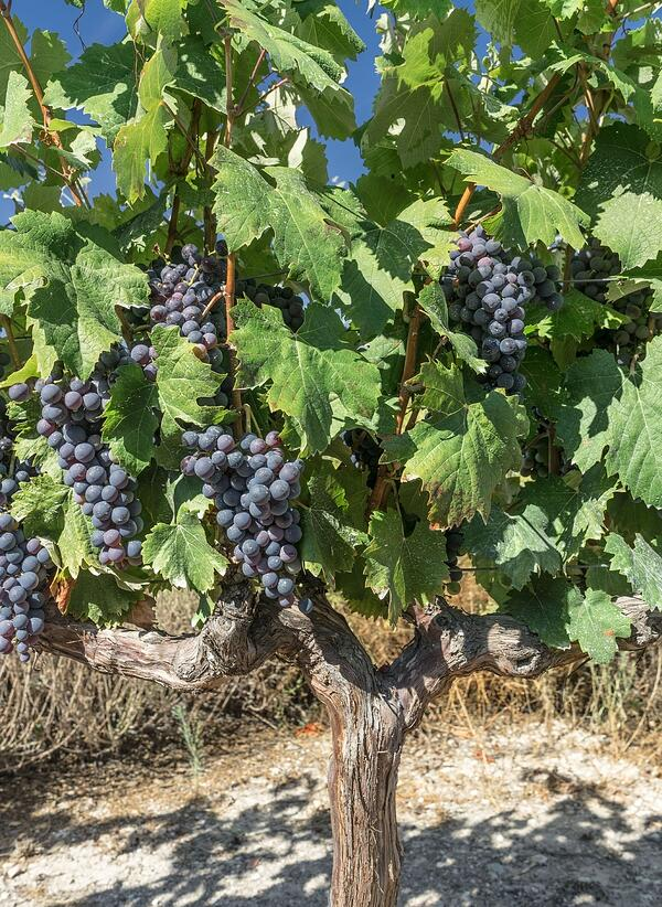 Everything You Need to Know About Rioja