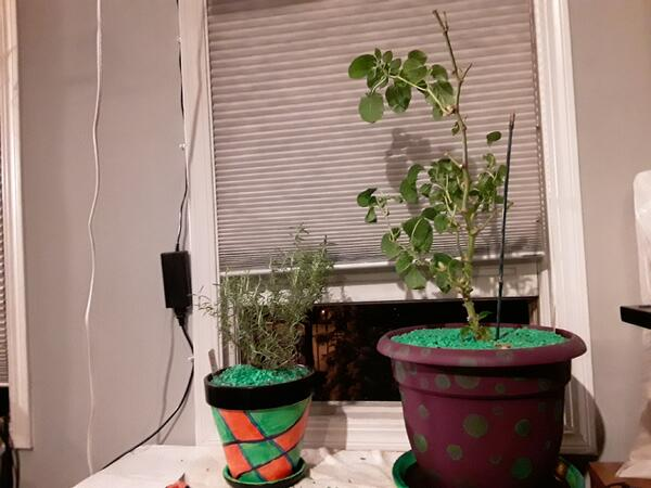 two plants