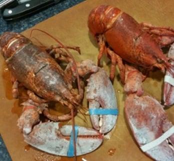 lobsterhomepage.jpg
