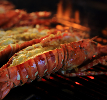 Lobster on Grill Home Page Box