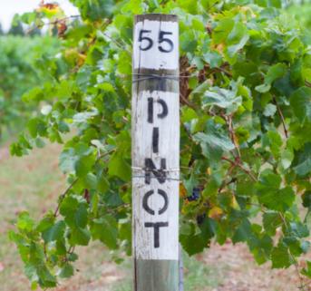 Pinot Wine Class Home Box