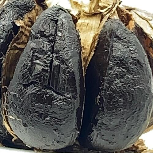 black garlic closeup
