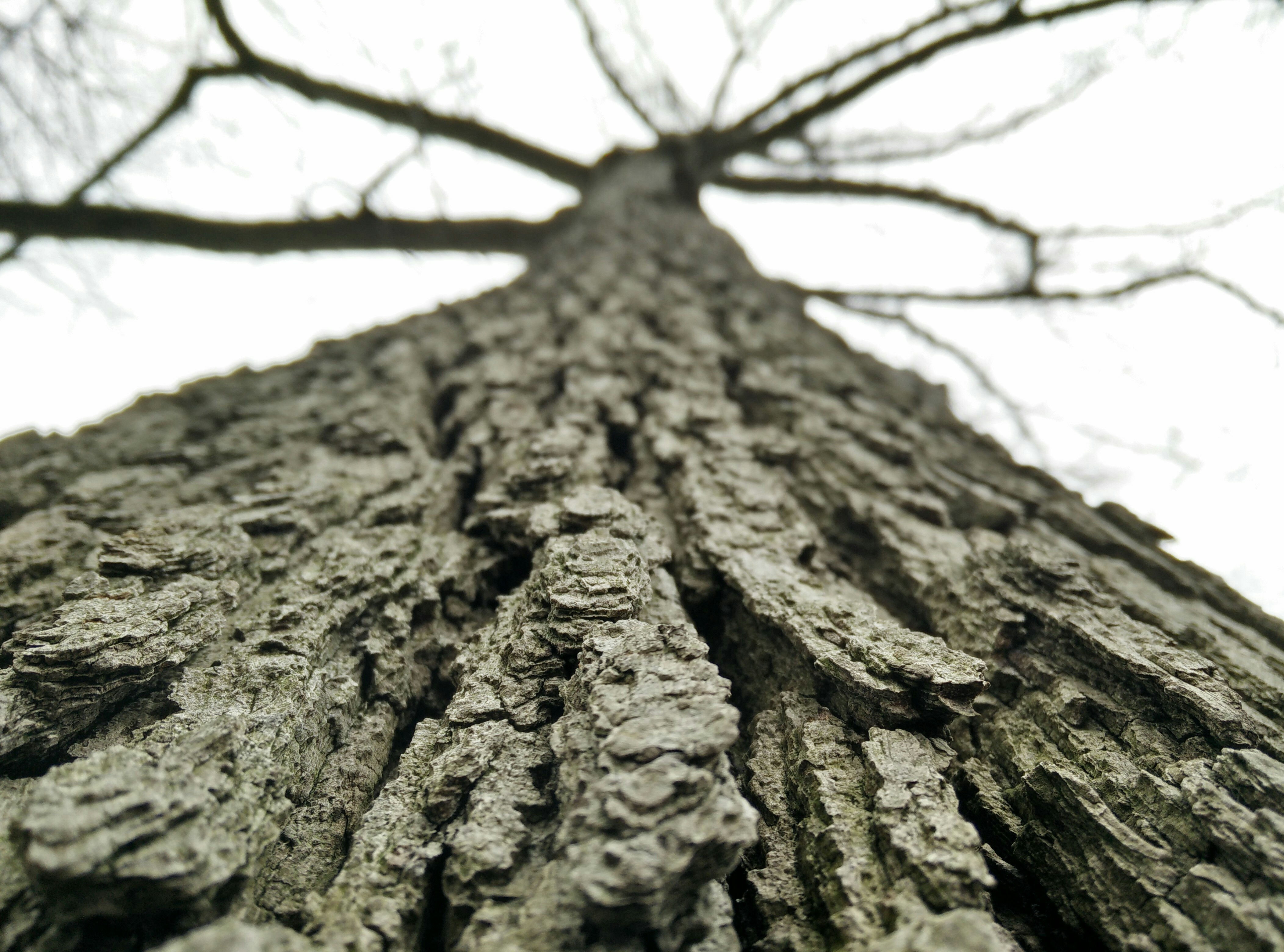 tree-nature-branch-black-and-white-plant-wood-103248-pxhere.com